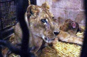 leoa-maus-tratos