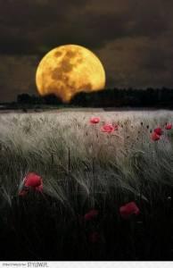lua e flor